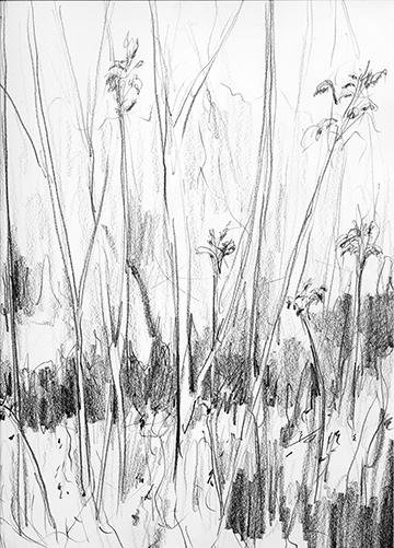 esteve-prat-paz-dibuixant-carbonet-pintor-oli-acrilic-bibliogradia-exposicions-critica-16-2004-llapis-sobre-paper